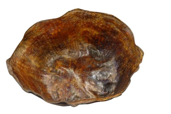 19thc Borneo Buffalo Skin Bowl