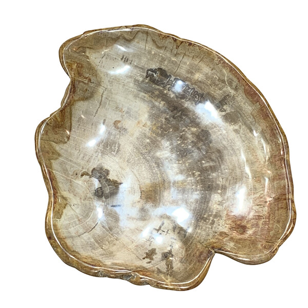 Indonesian Petrified Wood Shallow Bowl