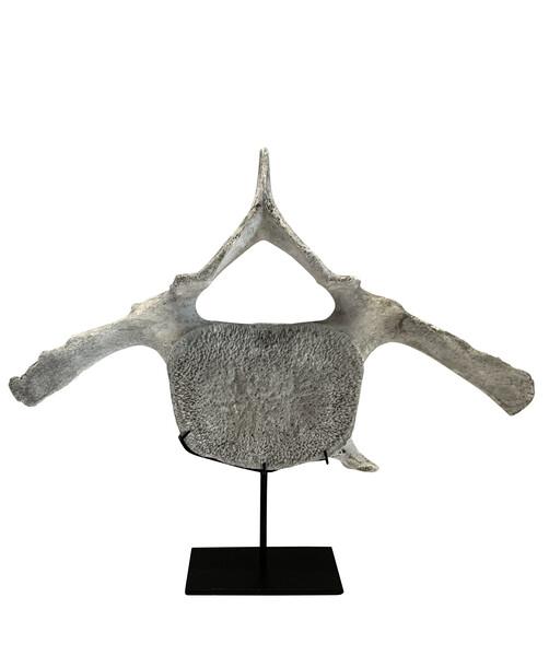 Indonesia Whale Bone Vertebrae