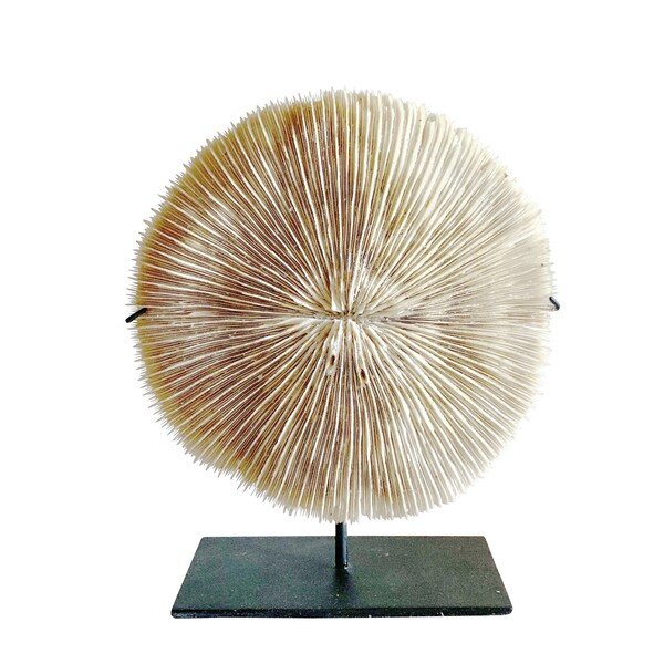 Indonesian Mounted Coral Disc