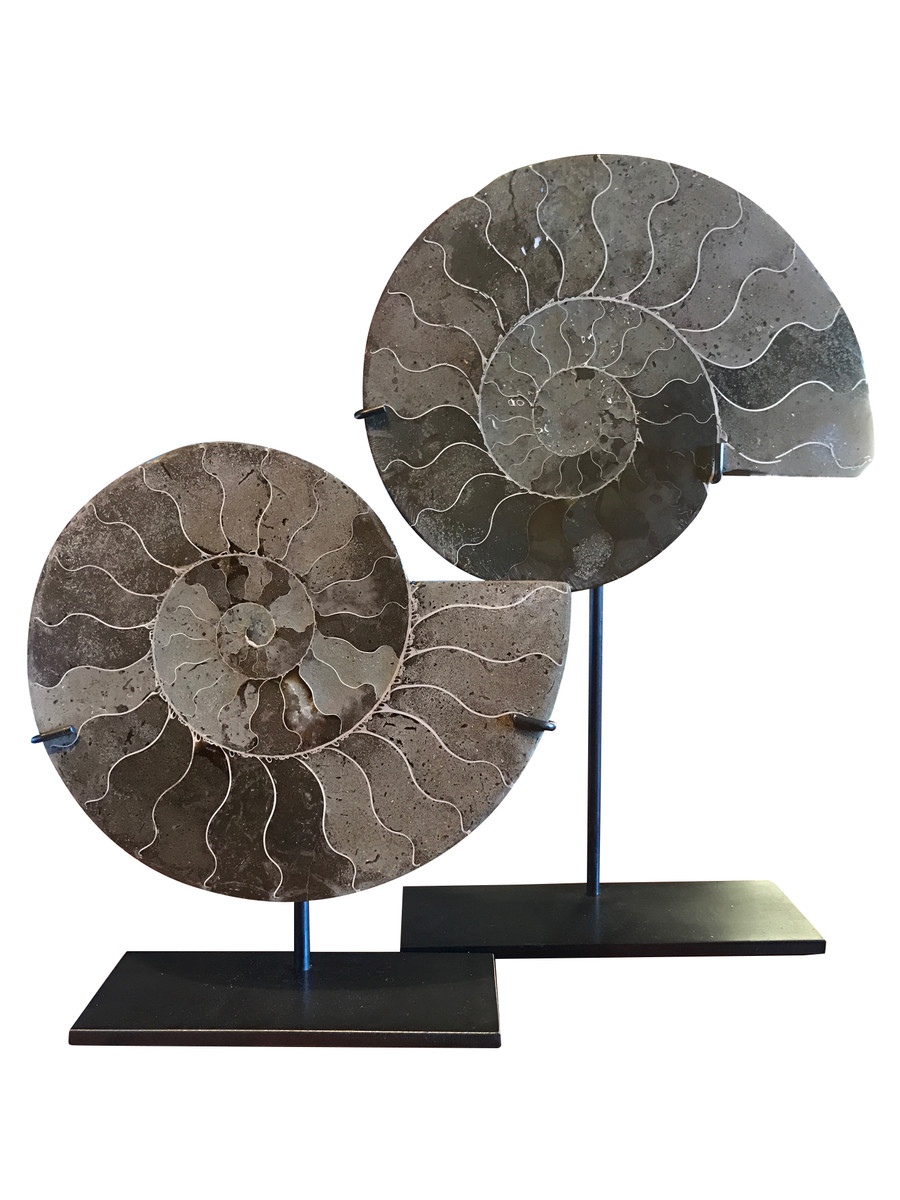 Balsamo Antiques Madagascar Pair Ammonites Home Decorators Catalog Best Ideas of Home Decor and Design [homedecoratorscatalog.us]