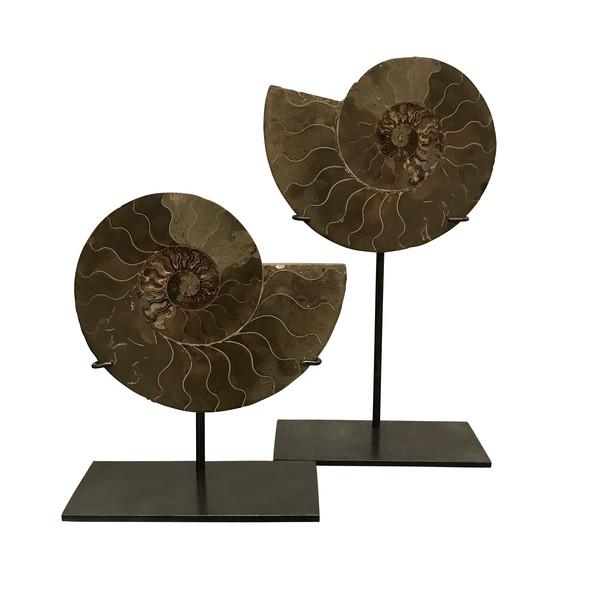 Madagascar Pair Ammonites