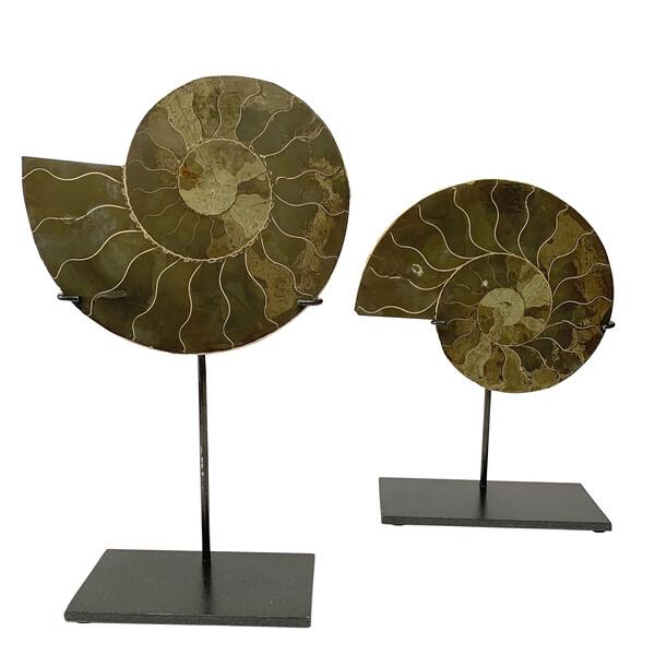 Prehistoric Madagascar Pair of Ammonites on Stands