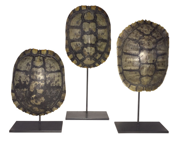Tortoise Shell on stand