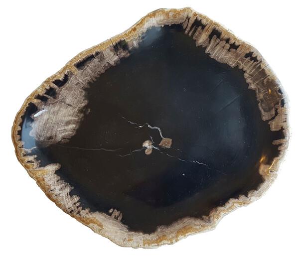 Indonesian Petrified Wood Plate