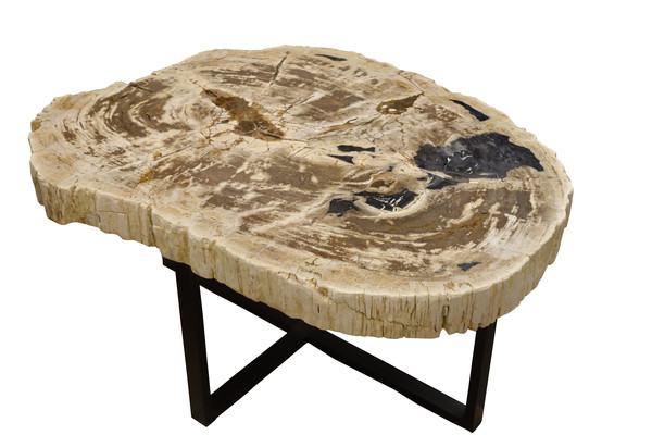 Contemporary Indonesian XL Thick Slice Petrified Wood Coffee Table